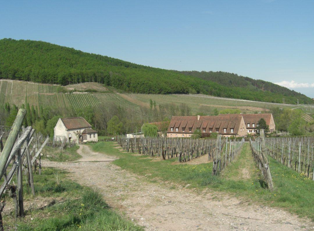 Abbaye n d de baumgarten for Baum garten